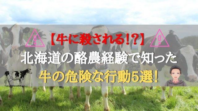 まとめ:牛とは優しい気持ちで接して危険を回避!