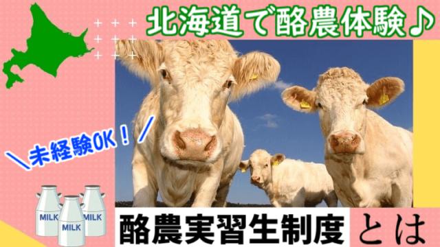 まとめ:20代での酪農実習生体験は大きな経験に繋がる!