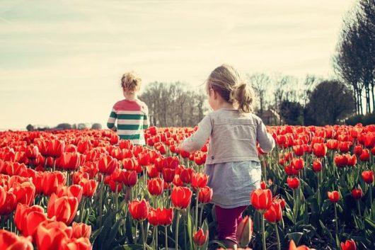 子供と一緒に自然の中で食育を学ぶ!