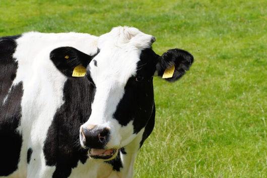 コープ牛乳、その他の口コミ・レビューを紹介