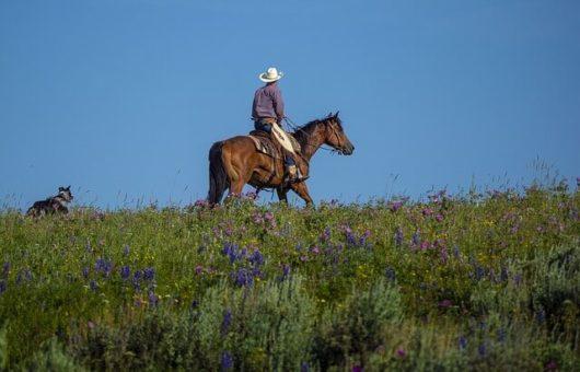 「リゾートバイトで牧場体験」は楽じゃない