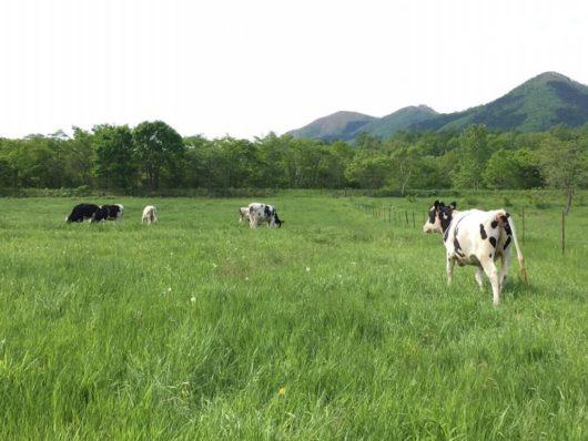 牛のかわいい牧場風景